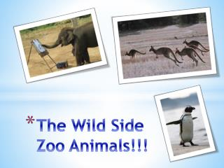 The Wild Side Zoo Animals!!!