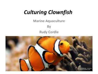 Culturing Clownfish