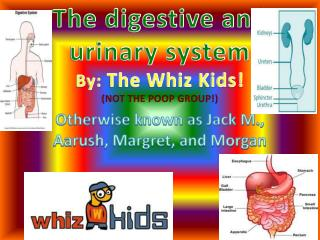 The digestive and urinary system  By:  The Whiz Kids! (NOT THE POOP GROUP!)