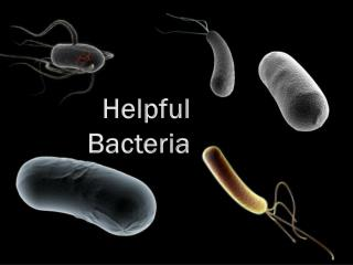 Helpful Bacteria