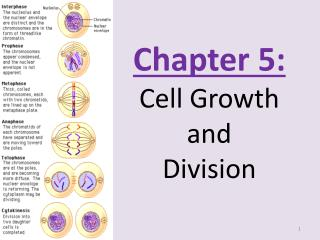 Chapter 5: Cell Growth and  Division