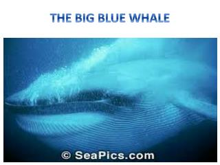 THE BIG BLUE WHALE