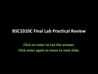 BSC1010C Final Lab Practical Review