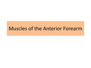 Muscles of the Anterior Forearm