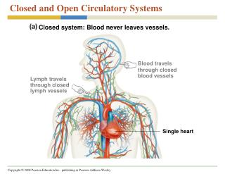 Closed and Open Circulatory Systems