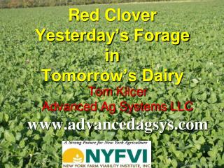Red Clover  Yesterday's Forage  in  Tomorrow's Dairy