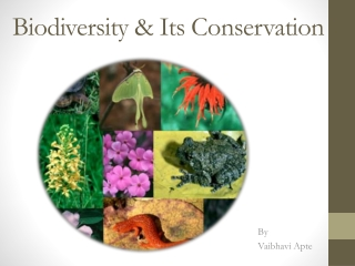 Threatened Medicinal Plants Diversity  of Gujarat : Its Conservation and Development Measures