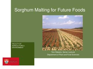 Sorghum Malting for Future Foods