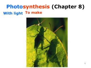 Photo synthesis  (Chapter 8)