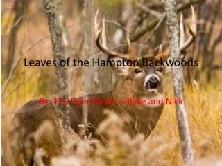 Leaves of the Hampton Backwoods