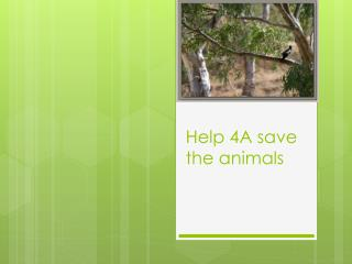 Help 4A save the animals