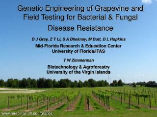 D J Gray, Z T Li, S A Dhekney, M Dutt, D L Hopkins Mid-Florida Research & Education Center University of Florida/IFA