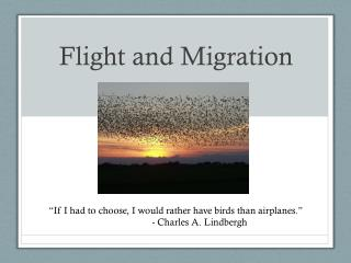 Flight and Migration