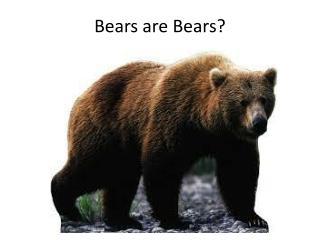 Bears are Bears?