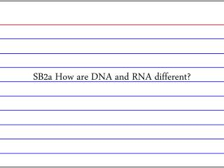 SB2a How are DNA and RNA different?