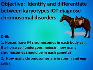 Objective:  Identify and differentiate between  karyotypes  IOT diagnose chromosomal disorders.