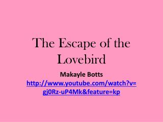 The Escape of the Lovebird