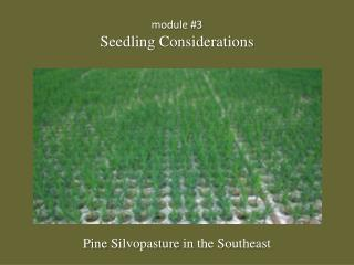 module #3 Seedling Considerations