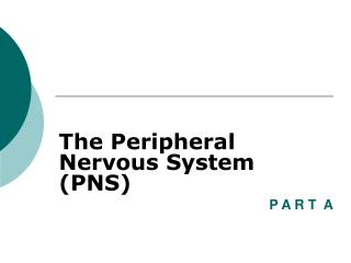 The Peripheral Nervous System (PNS)