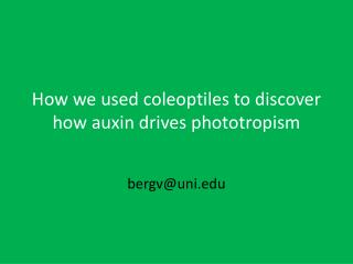 How we used coleoptiles to discover how  auxin drives  phototropism