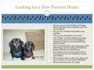 Looking for a New Forever Home