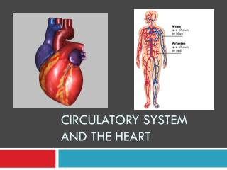 Circulatory System and The Heart