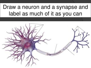 Draw a neuron and a synapse and label as much of it as you can