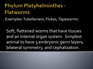 Phylum  Platyhelminthes  - Flatworms