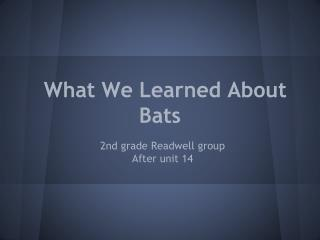 What We Learned About Bats