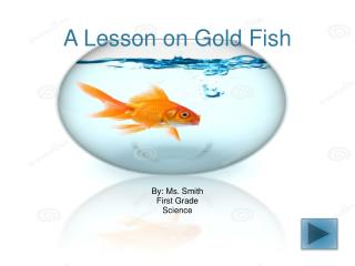 A Lesson on Gold Fish