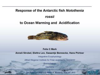 Response of the Antarctic fish  Notothenia rossii to Ocean Warming and  Acidification