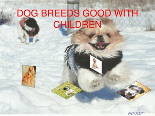 Dogs Breeds