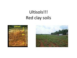 Ultisols !!! Red clay soils