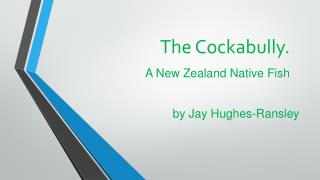The Cockabully. A New Zealand Native Fish