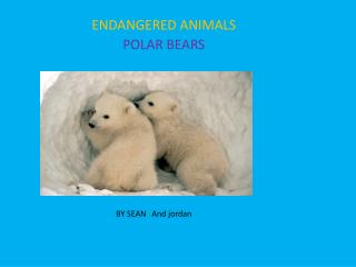 ENDANGERED ANIMALS  POLAR BEARS