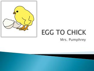 EGG TO CHICK