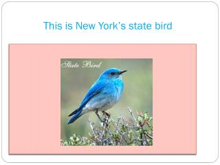 This is New York's state bird