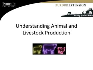 Understanding Animal and Livestock Production