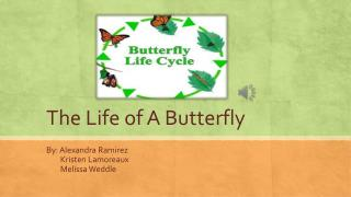 The Life of A Butterfly
