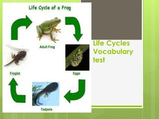 Life Cycles Vocabulary test