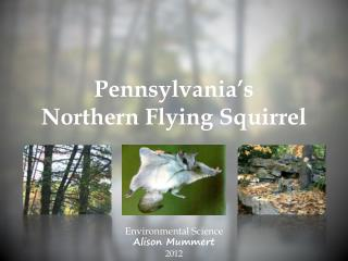 Pennsylvania's  Northern Flying Squirrel