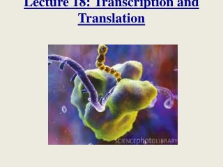 Lecture 18: Transcription and Translation