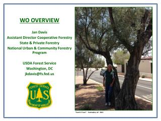 WO OVERVIEW Jan Davis Assistant Director Cooperative Forestry State & Private Forestry