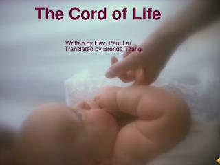The Cord of Life Written by Rev. Paul Lai         Translated by Brenda Tsang