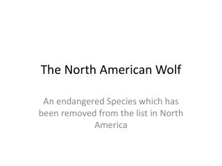 The  North American Wolf