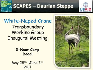 White- Naped  Crane  Transboundary  Working Group Inaugural Meeting