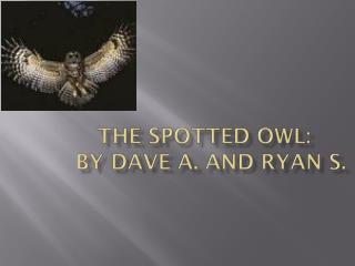 THE SPOTTED OWL:   BY DAVE A. AND RYAN S.
