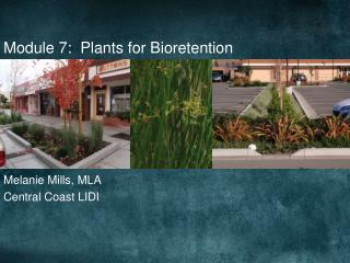 Module 7:  Plants for Bioretention