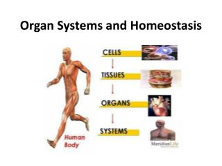 Organ Systems and Homeostasis