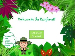 Welcome to the Rainforest!